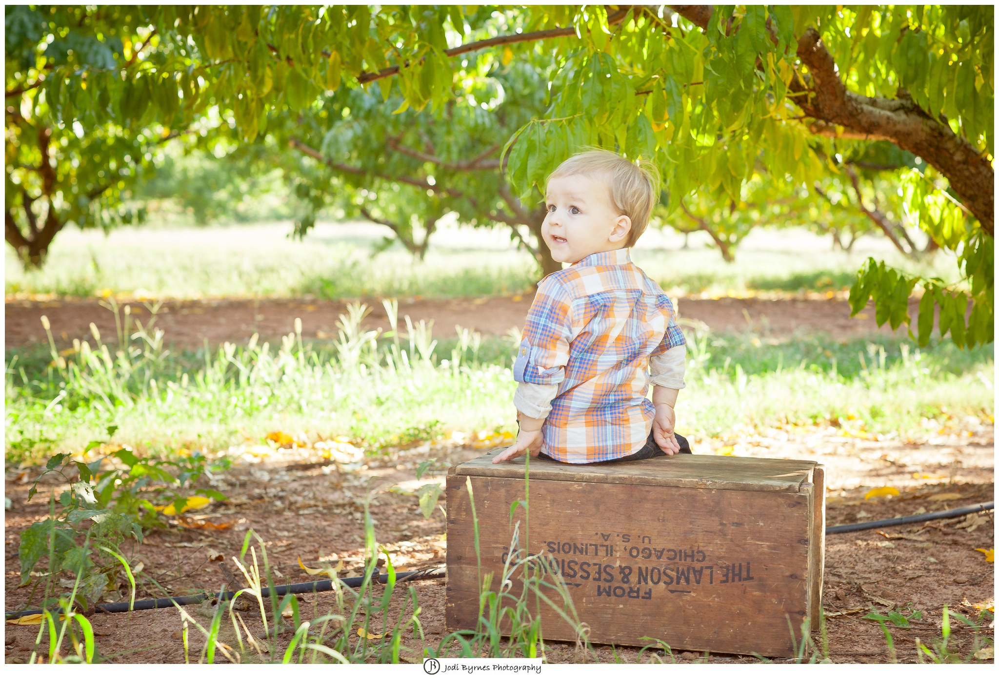 two year old boy portraits